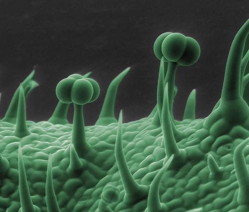 Imágenes de cosas normales vistas con el microscopio