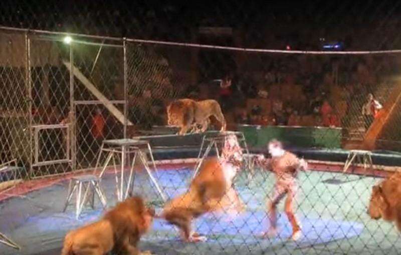 IMPRECIONANTE: Leon ataca a su entrenador en el circo