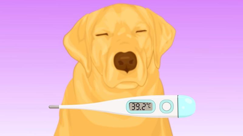 Signos vitales de tu perro